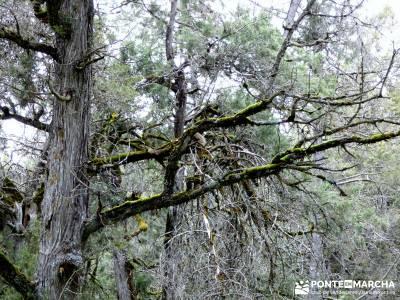 La Fuentona y el Sabinar de Calatañazor; El rebrotar de la vida;reto senderismo